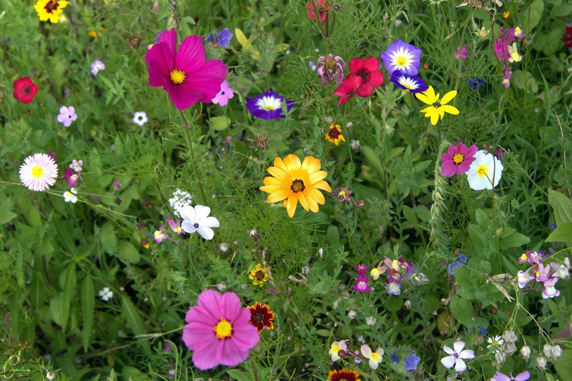 Blumenwiese Fotocommunityto Die Klassische Fotocommuniy 1 Foto