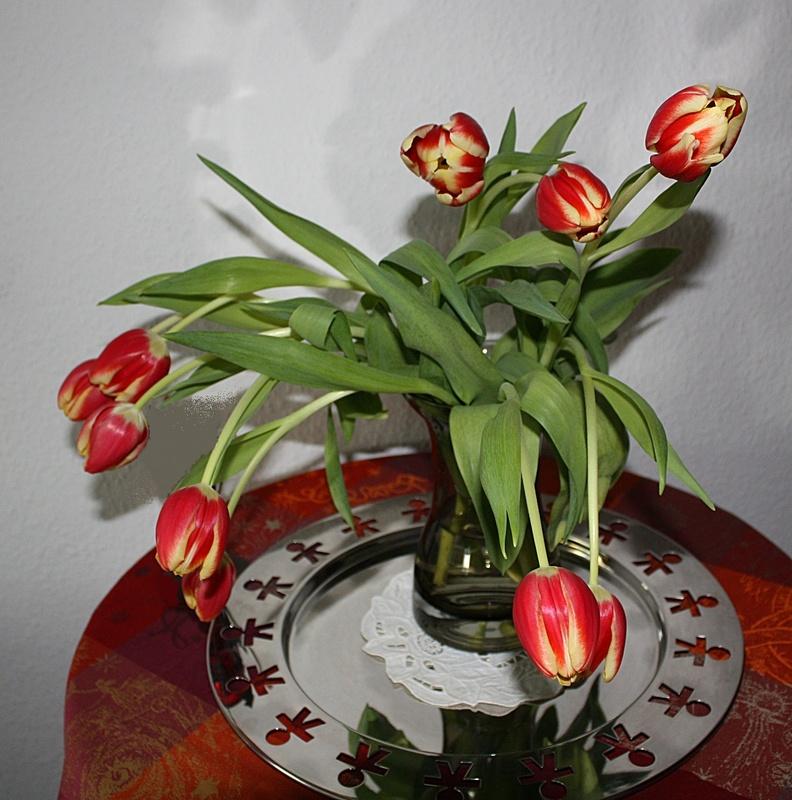 Tulpen Wenn Sie In Der Vase Wachsen Fotocommunityto Die