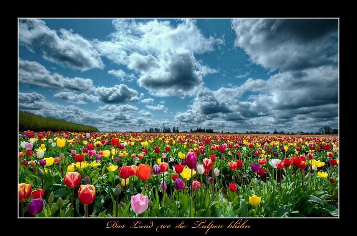 das land wo die tulpen bl hn die klassische fotocommuniy 1 foto pro tag. Black Bedroom Furniture Sets. Home Design Ideas