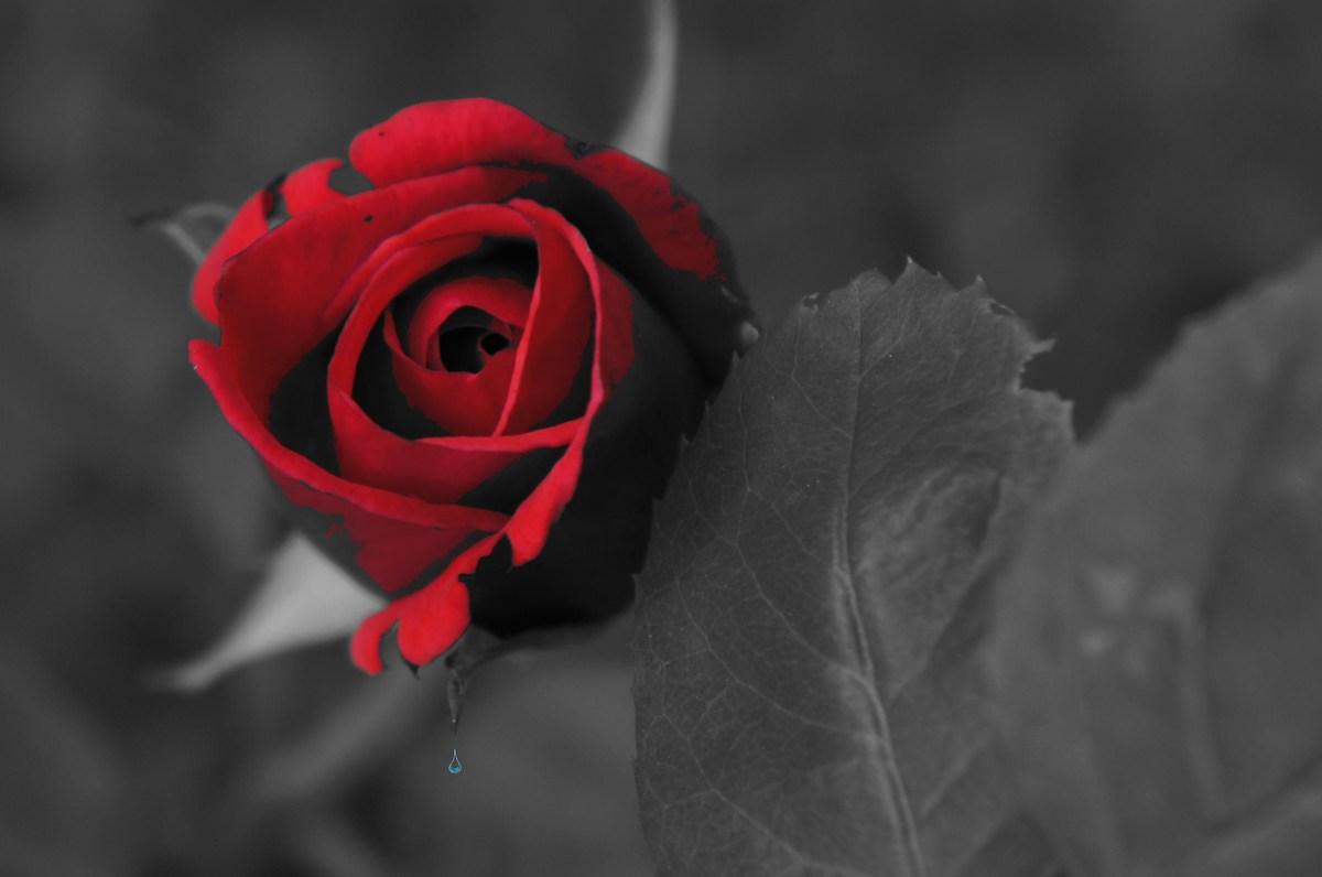Kerze Rose Trauer