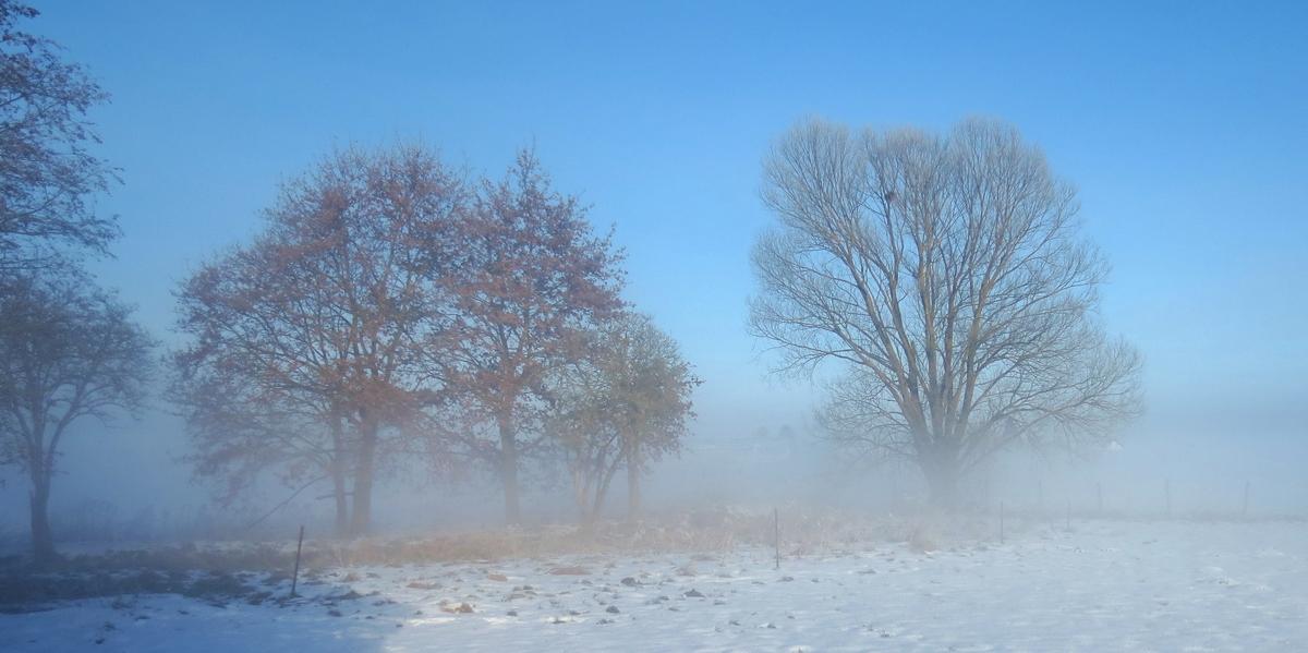 Guten Morgen Foto Fotocommunityto Die Klassische