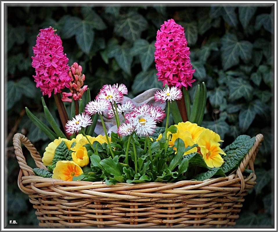 frühlingsblumen korb  fotocommunityto  die klassische